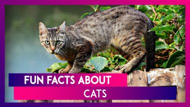 International Cat Day 2020: Interesting Facts About These Felines That You May Not Know